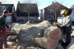 Dode Beuk verzagen tot brandhout